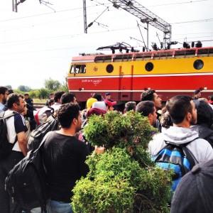treno pp